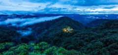 The Cloud Forest