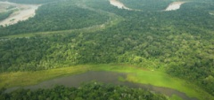 The Amazon