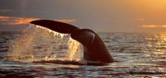 A wildlife bonanza - Whale fluke