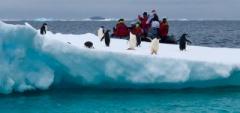 Adelies-on-Iceberg