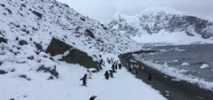 Adelie penguins on the Antarctic Peninsula