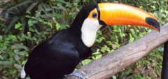 Janice and Charles - toucan