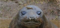 Inquisitive Seal