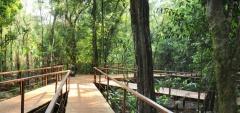 La Cantera - The forest
