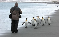 Close encounters with penguins