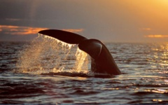 Argentina - Whale watching